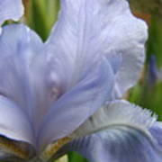Iris Flower Blue 2 Irises Botanical Garden Art Prints Baslee Troutman Poster