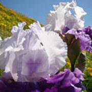 Iris Flowers Purple White Irises Poppy Hillside Landscape Art Prints Baslee Troutman Poster