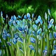 Iris Galore Poster