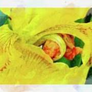 Iris In Abstract Poster