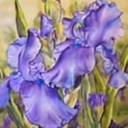 Iris In Purple Poster