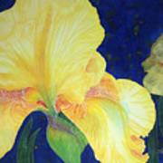 Iris Miami Beach Poster