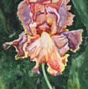 Iris On Yupo Poster