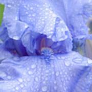 Iris Rainy Day Blue Poster
