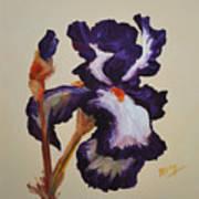 Iris Squared 2 Poster