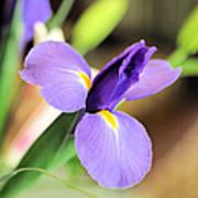 Iris Unfolding IIi Poster