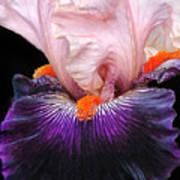 Iris Up Close Poster