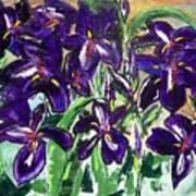 Iris Poster