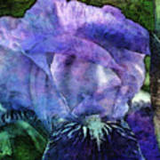 Iris With Buds 9821 Idp_2 Poster