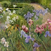 Irises At Bedfield Poster