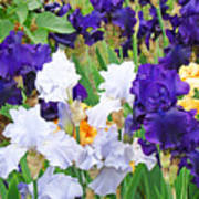 Irises Flowers Garden Botanical Art Prints Baslee Troutman Poster