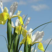 Irises In Blue Sky Art Print Spring Iris Flowers Baslee Troutman Poster
