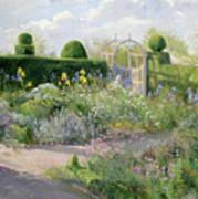 Irises In The Herb Garden Poster