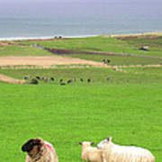 Irish Coast Poster