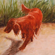 Irish Setter In The Grass Poster