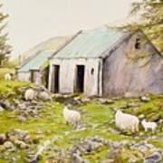 Irish Sheep Farm Poster