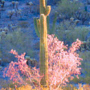 Ironwood Saguaro Dance Poster