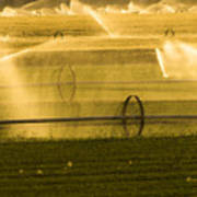 Irrigation System Operating At Sunset Poster