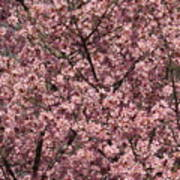 First Spring Blossom Poster
