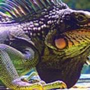 Island Iguana Poster