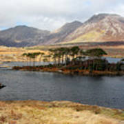 Island Of Trees In A Bare Connemara Landscape Poster
