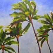 Island Palms Poster