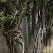 Israel, Tree Trunk Poster