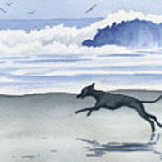 Italian Greyhound At The Beach Poster
