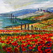 Italy Tuscan Poppies Poster
