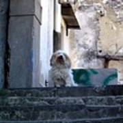 Italy's Capri Doggie Poster