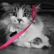 Itz A Cat Poster