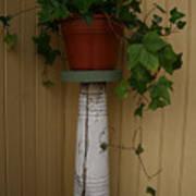 Ivy Corner Poster