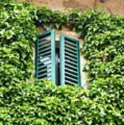 Ivy Shutters Poster