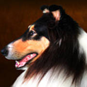 Black Jack- Collie Poster