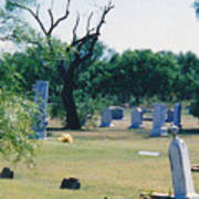Jack Rabbit In Cementery Poster