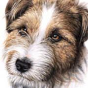 Jack Russell Terrier Portrait Poster