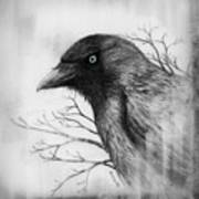 Jackdaw At My Window Poster