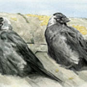 Jackdaws In The Sun Poster