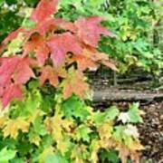 Jamaica Me Fall Poster