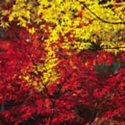Japan Vibrant Leaves Poster