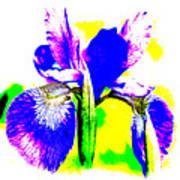 Japanese Iris Pop Art Abstract Poster