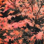 Japanese Maple - Nature Art Poster