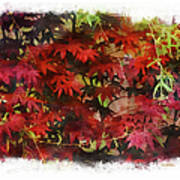 Japanese Maple Under The Willow Poster