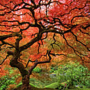 Japenese Garden, Portland Poster