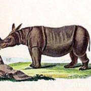 Javan Rhinoceros, Endangered Species Poster