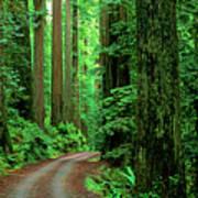 Jedediah Smith Redwoods                            Poster