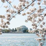 Jefferson Memorial Blossoms Poster