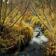 Jenny Creek In Autumn Poster