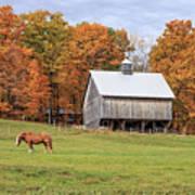 Jericho Hill Vermont Horse Barn Fall Foliage Poster