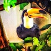 Jewel Of The Amazon Toco Toucan  Poster